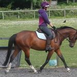 Flatwork with a youngster